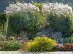Projektowanie ogrodów Bielsko-biała