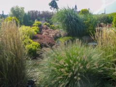 Trawy krzewy w ogrodzie Orzesze