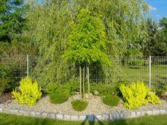 Kompozycje ogrodowe Bielskobiała