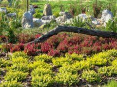 Kompozycje kwiatowe ogród Rybnik