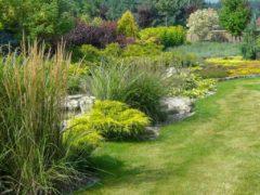 Trawniki siane i z rolki Orzesze