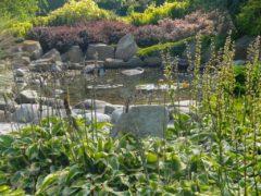 Projektowanie ogrodów Orzesze